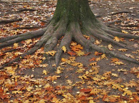 Притча Листья и корни
